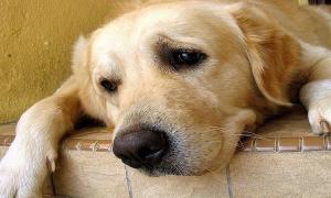 За кучетата и хората